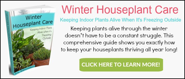 winter-houseplant-care-banner-ad